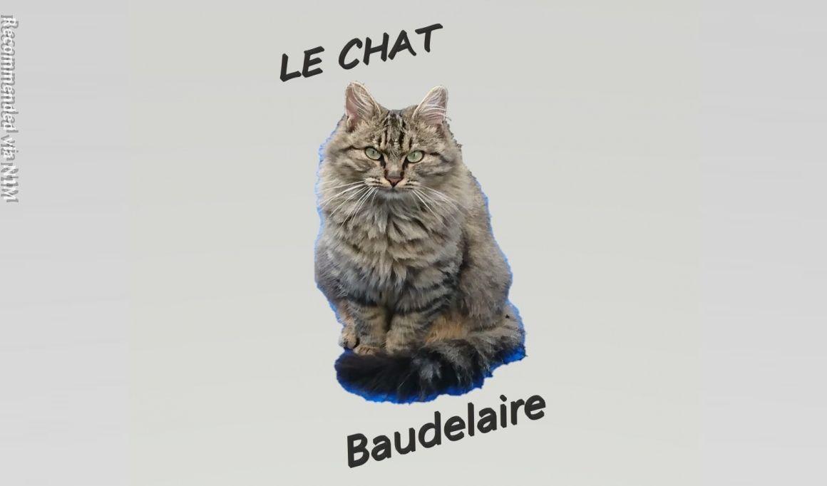 Le Chat _ the cat - Baudelaire