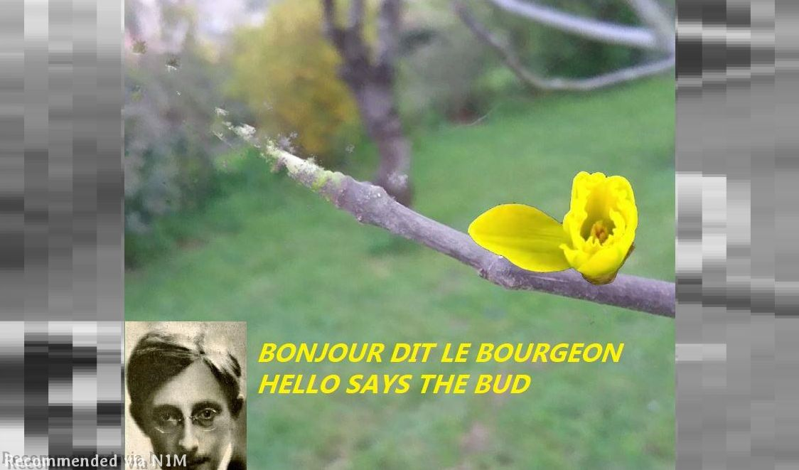 HELLO SAYS THE BUD - BONJOUR DIT LE BOURGEON