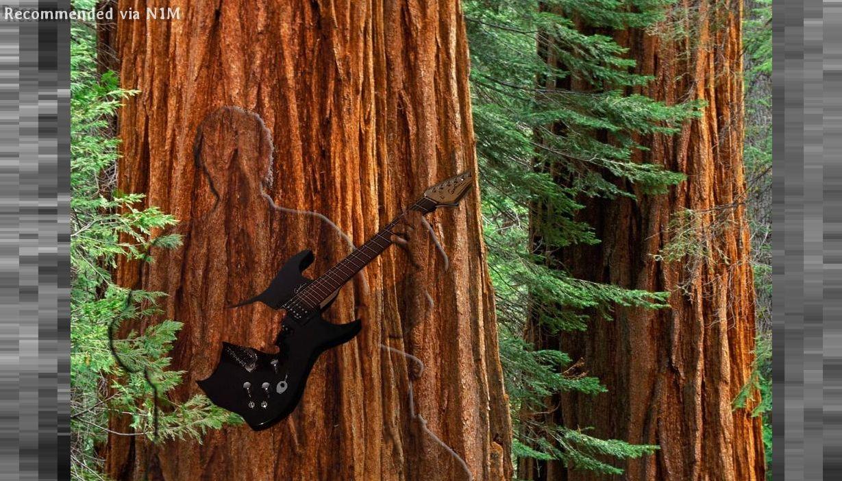 Living Wood Edit #2