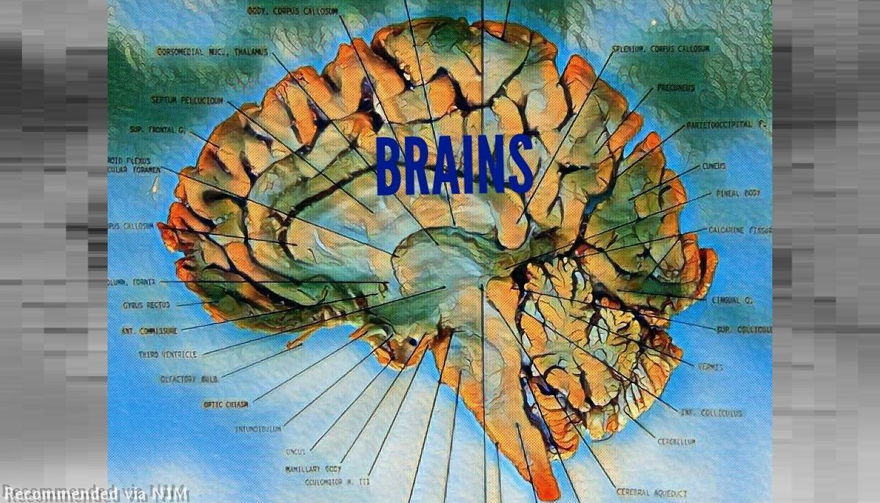 BRAINS by FLYMANHITZ