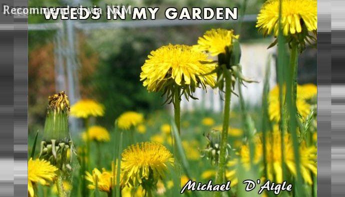 WEEDS in my GARDEN